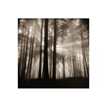 Forest Light I