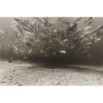 Fish Explosion II