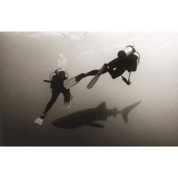 Two Divers and Whale Shark