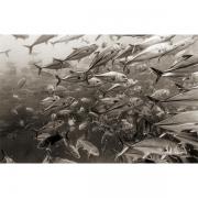 Fish Intensive III — Photography by Robin V. Robinson